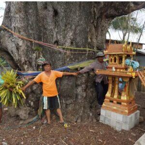 """คอหวยขอ """"เลขเด็ด"""" ต้นมะขามยักษ์ อายุ 700 ปี"""