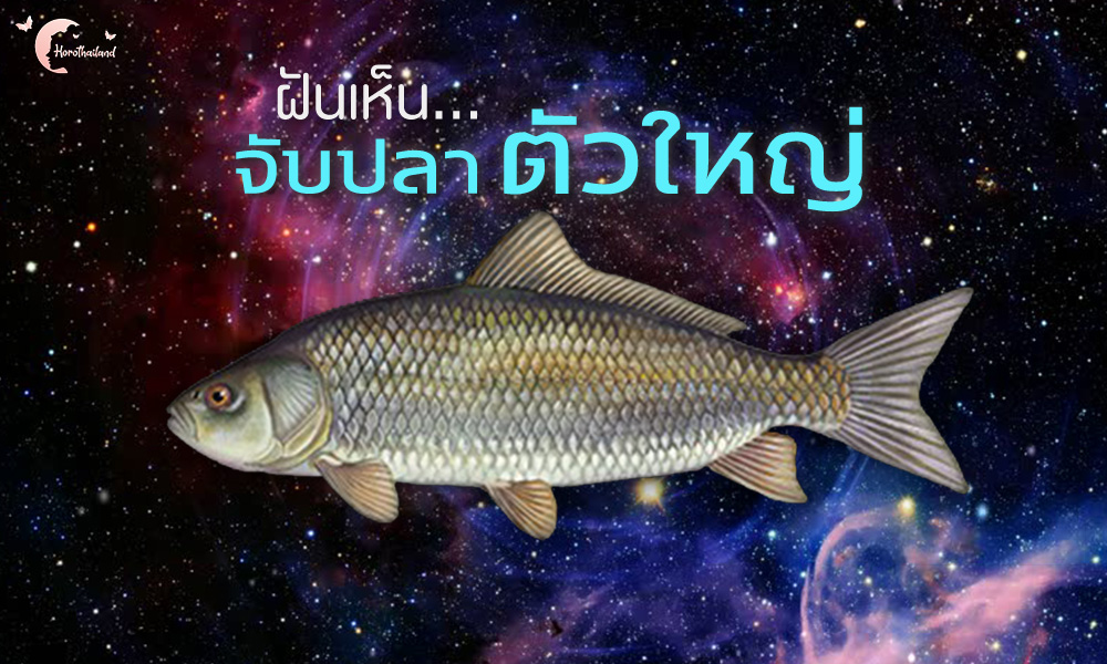 ฝันว่าจับปลา