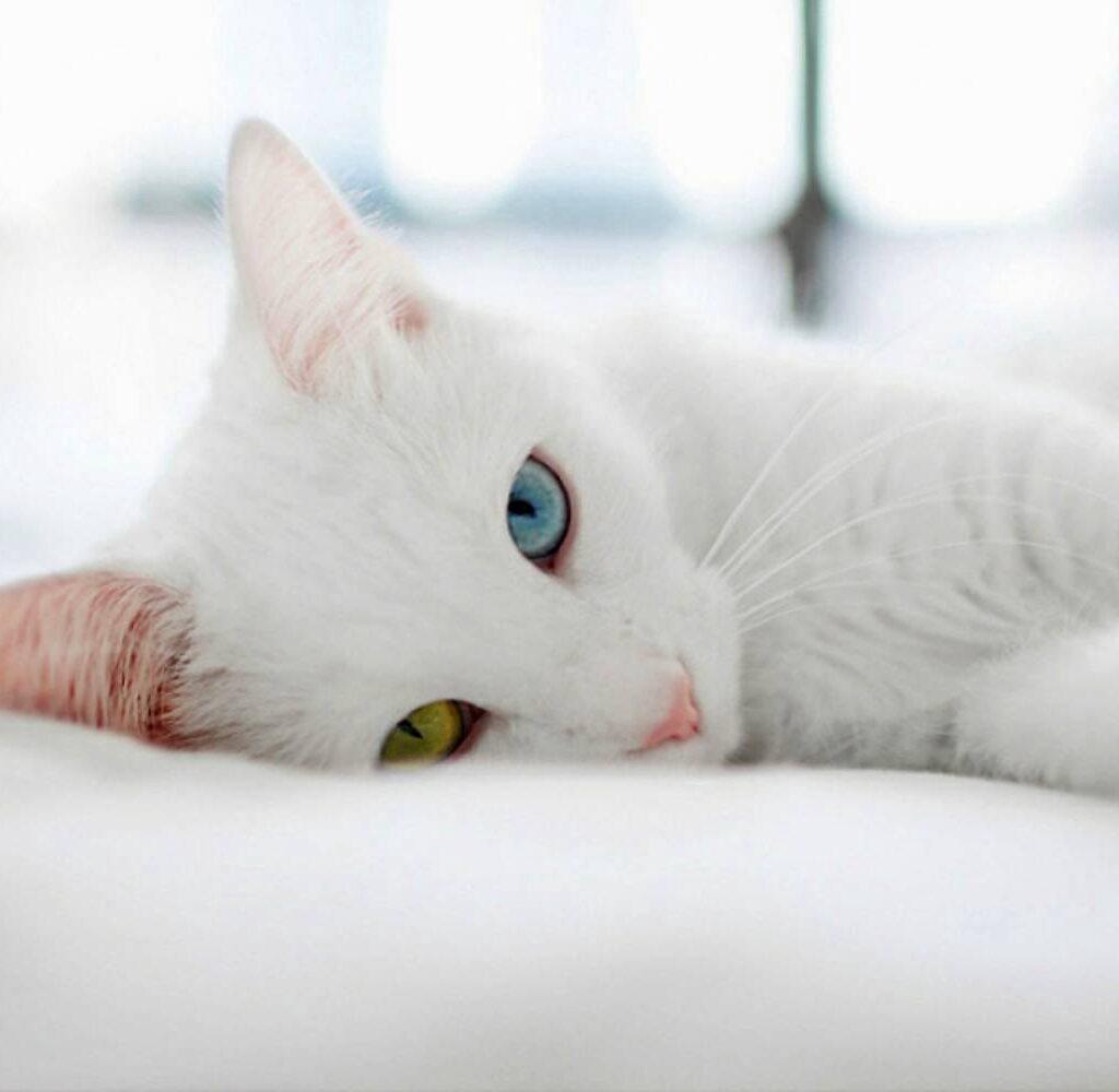 ทาสแมวต้องรู้! ไขความเชื่อ แมวมงคล กวักเงินกวักทอง - เกร็ดความรู้ดูดวง