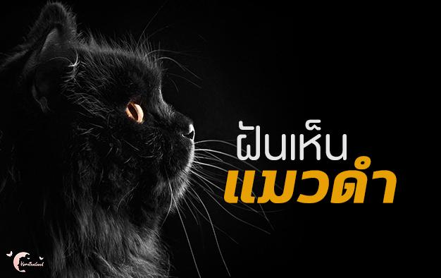 ทำนายฝัน ฝันเห็นแมวดำ